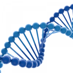 Considering the Organizational DNA within the Self-Renewal Process